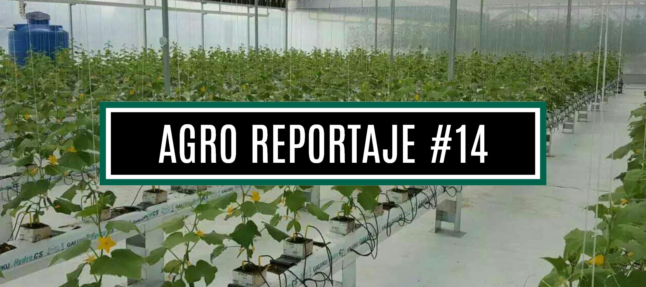 AGRO REPORTAJE #14 (WEB)
